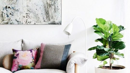 Fiddle-Leaf-Fig-Tree-7